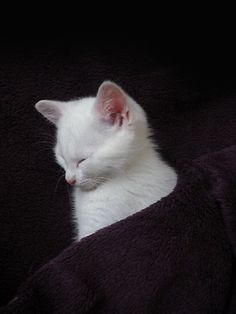 These cute kittens will brighten your day. Cats are wonderful friends. Pretty Cats, Beautiful Cats, Animals Beautiful, Baby Animals, Funny Animals, Cute Animals, Funny Cats, Cute Kittens, Cats And Kittens