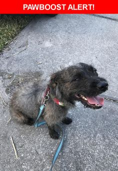 Is this your lost pet? Found in Palm Bay, FL 32907. Please spread the word so we can find the owner!    Nearest Address: Lamplighter Drive Northwest, Palm Bay, FL, United States