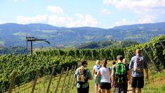 Glanzer Weintour mit Weinkultur | Südsteirische Weinstraße Mountains, Nature, Signage, Trench, Culture, Naturaleza, Nature Illustration, Off Grid, Bergen