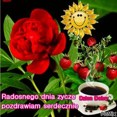 dzien dobry Pictures, Bonito, Beautiful Flowers Pictures, Pretty Pictures, Nice Asses, Photos, Grimm