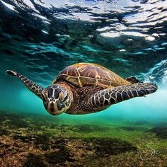 Gorgeous photography  #turtle #turtles #turtlelove #turtlesofinstagram #turtlelife #turtlelover #turtlegram #turtlesofig