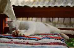 Lazy summer days   Charms of Simple   #charmsoftravel #charmsofsimple #cat Lazy Summer Days, Simple Blog, Charms, Travel, Inspiration, Biblical Inspiration, Viajes, Destinations, Traveling