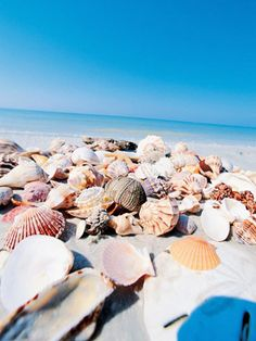 florida sanibel and captiva islands they are said to be the best islands for shell collecting in the United States and a great beach for kids because the water is shallow much further out than most beaches