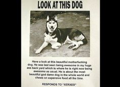The 10 Funniest Missing Pet Signs Of All Time (PHOTOS)