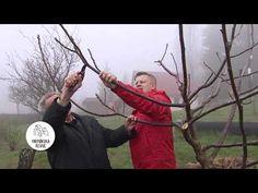 Ivan Hričovský: Kedy režeme orech? - YouTube Gardening, Youtube, Professor, Lawn And Garden, Youtubers, Youtube Movies, Horticulture