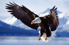 Méditation de l'Archange Michaël – Vol sur les Ailes d'un Aigle