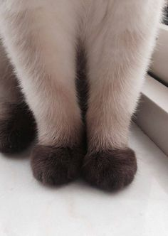 Little Paws . cat recipes monty the cat cats things cat base awesome cats cat and dog lost cat cat craft funny kitty cats cat tutorial guilty dogs laughing cat cat stuff furniture cat home ideas sheep cat Pretty Cats, Beautiful Cats, Animals Beautiful, Cute Cats, Pretty Kitty, Cute Baby Animals, Animals And Pets, Funny Animals, Animals Images