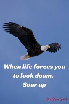 Motivational & Fitness Quotes with Pictures | Bird Wisdom ...
