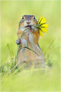 A flower for you.
