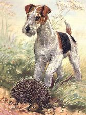 WIRE FOX TERRIER CHARMING DOG GREETINGS NOTE CARD LOVELY DOG AND HEDGEHOG