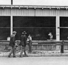 Part of the old 1915-1916 Panama-California Exposition zoo exhibits, in the rows of cages along what is now Park Boulevard.