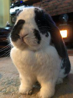 Bunny Ollie