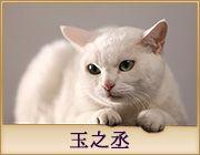 猫侍 三重テレビで毎週火曜日に放映 Neko