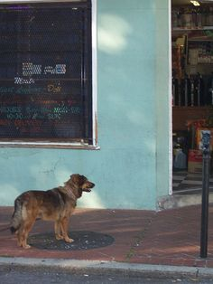 dog outside the grocery store