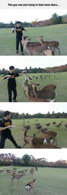This Guy Was Just Trying to Feed Some Deers funny animals nature animal deer hilarious humor running wild life funny pictures funny images Funny Animal Memes, Cute Funny Animals, Funny Animal Pictures, Funny Cute, The Funny, Funny Memes, Jokes, Funniest Pictures, Daily Funny