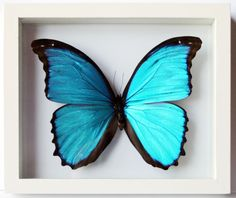 simple single framed butterfly that one could easily make herself if she found a dead butterfly