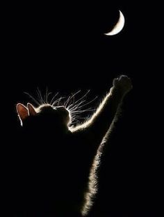 Cat and the moon '' If I stretch a bit , I know I can reach it ''