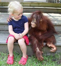 orangutang with baby girl #5