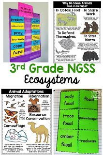Third Grade Interdependent Relationships in Ecosystems unit aligned to NGSS standards and Hands on activities, non fiction reading passages, vocabulary, and more are included to help you teach these standards. Primary Science, Third Grade Science, Elementary Science, Teaching Science, Creative Teaching, Teaching Tools, 3rd Grade Classroom, Science Classroom, Classroom Ideas