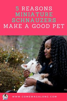 Miniature Schnauzers make great pets. Find out 5 reasons why! #miniaturedogbreeds