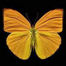 Butterfly IV, picture from the series Black by Heiko Hellwig, artist of category FINE WORKS at photo art editions LUMAS Art For Sale Online, Online Art, Black Queen, Salvador Dali, Vincent Van Gogh, Photography Projects, Nature Photography, Color Photography, Minis