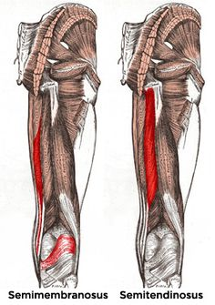 Bodybuilding.com - Anatomy Of An Injury: Hamstring Pulls And Tears