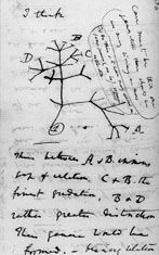 Tree of Life: the first-known sketch by Charles Darwin of an evolutionary tree describing the relationships among groups of organisms