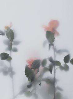 Thérèse Verrat | ÔPOS