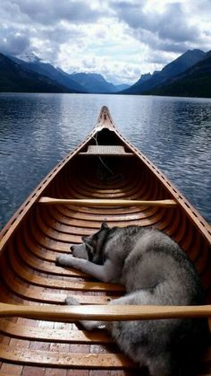 Husky loving summer
