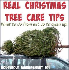 Here are tips and tricks for real Christmas tree care, to help your tree last, and how to clean up dropped needles and sap {on Household Management 101}