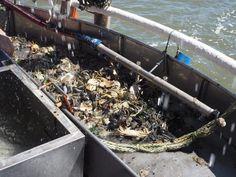 De eerste vangst van visje en krabbetjes. Snel kijken wat er tussen ligt