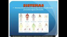 Anatomia en Biomagnetismo Medico