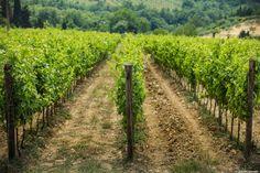 Il Wine Club Esclusivo per gli Amanti del Chianti.