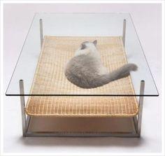 고양이를 위한 테이블