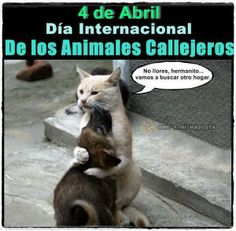 4 de Abril está declarado día internacional de los animales callejeros