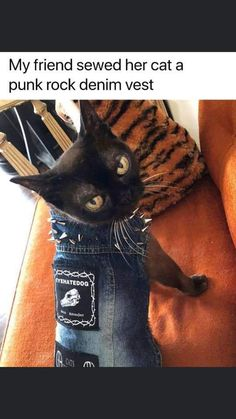 (5) Simon Cheshire (@SimonCheshire2) / Twitter Punk Rock, My Friend, Sewing, Twitter, Cats, Animals, Dressmaking, Gatos, Animales