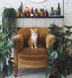 "(@houseplantclub) on Instagram: ""Move over kitty, we're coming to sit with you : @jt_design thanks for sharing with…"""