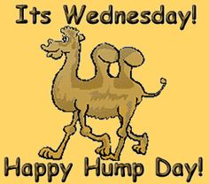 It's wednesday happy hump day. Wednesday Greetings, Wednesday Hump Day, Wednesday Humor, Happy Wednesday Pictures, Hump Day Quotes, Daily Quotes, Hump Day Camel, Hello July, Snoopy Quotes
