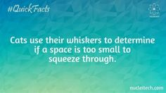 Cats use their whiskers to determine if a space is too small to squeeze through.