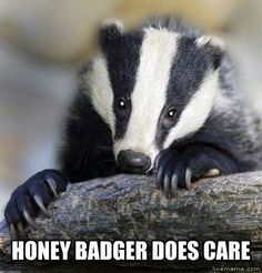 Sensitive Honey Badger