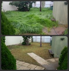 Garden Clean-Up. Lawn Mowing, Edging, Weeding, Spraying, Pruning, Clean-Up and General Tidy.  What can Trusted do for you?