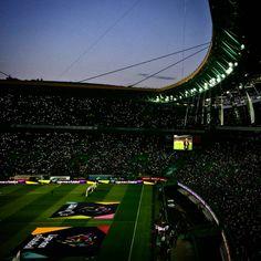 <3 Best Club, Scp, Men's Fashion, Soccer, World, Sports, Football, Amor, Palm Trees
