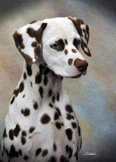 I don't normally care for liver Dalmatians, but this one is quite striking.