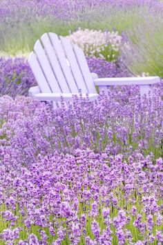 Among the Lavender | by Georgianna LaneArt, Nature, Home And IdeasMore Pins Like This At FOSTERGINGER @ Pinterest✋