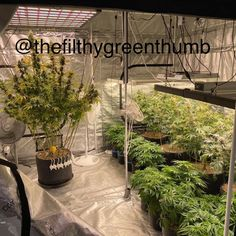 ECO Farm 740W LED light strips is SAMSUNG chip 3500k+SMD 660nm +SMD 730nm IR+SMD chip 395nm UV SMD 395nm730nm LED chips can be independently dimmed and controlled In particular, it helps increase the THC content during the flowering period. The product is equipped with RJ14 dual network and manual dimming, which can be connected in series with APP control. A single controller can be connected in series with 200 lamps for simultaneous dimming and timing. Bar Lighting, Strip Lighting, Vertical Farming, Grow Room, Grow Tent, App Control, Led Grow Lights, Led Light Strips, Hydroponics