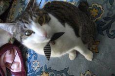 猫自慢の自慢の猫が続々と集まるスレ:ハムスター速報