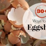 30+ Things to Do with Eggshells- I was interested in ways to use our left-over eggshells. Great ideas here. Organic would be best with most of the tips.