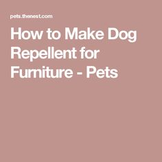 How to Make Dog Repellent for Furniture - Pets