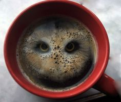 Funny pictures about Owl In Coffee. Oh, and cool pics about Owl In Coffee. Also, Owl In Coffee photos. Latte Art, Café Latte, Owl Coffee, Coffee Art, Coffee Cups, Drink Coffee, Coffee Break, Coffee Theme, Coffee Drawing