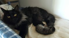 My aunt's cat gave birth to two adorable kitten (X-post from aww)